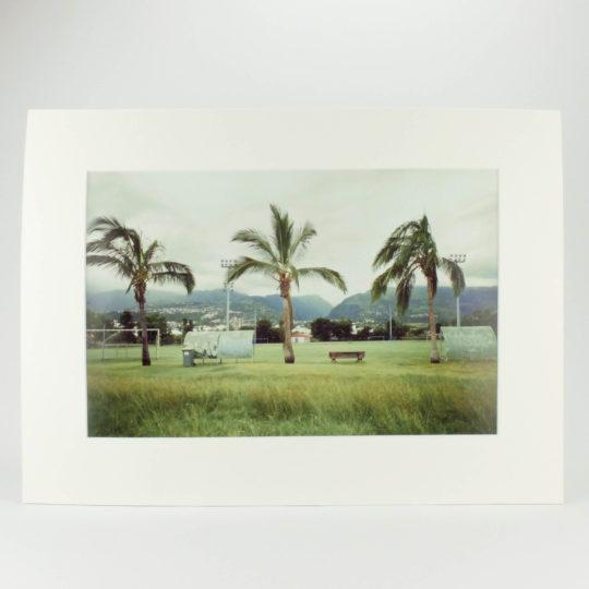 Romu Palmiers argentique 1