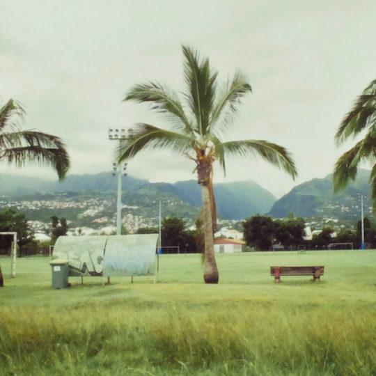 Romu Palmiers argentique 2