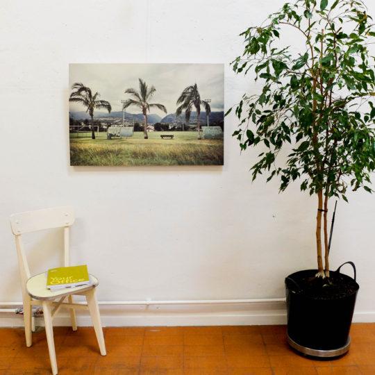 Romu Palmiers bois grand 1