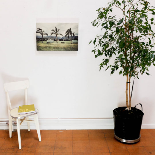 Romu Palmiers bois petit 1